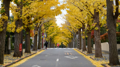 Recommended Spots in Ota City for Autumn